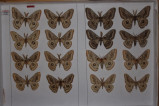 Сколько видов содержится в коллекции Зоологии?