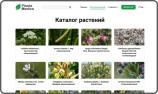Создан интерактивный атлас перспективных лекарственных растений Узбекистана