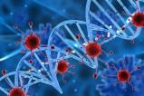 O'zbekistonda birinchi marta SARS-CoV-2 virusining 32 ta namunasi genomlari o'qildi