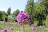 O'zbek-xitoy piyozlar bog'i 2021-yil mavsumining ochilishi