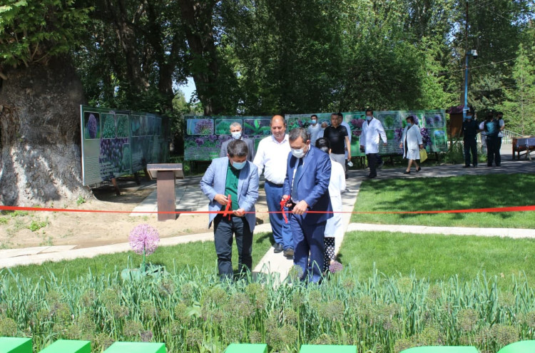 Узбекско-китайского лукового сада 2021 года