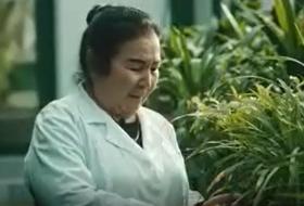 Atirgul Xolmirzayeva – O'zR FA Toshkent Botanika bog'i yetakchi dendrolog mutaxassisi